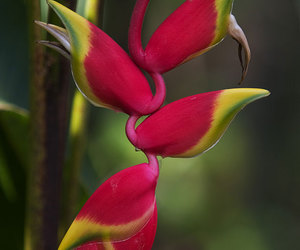 exotic flowers and heliconia image