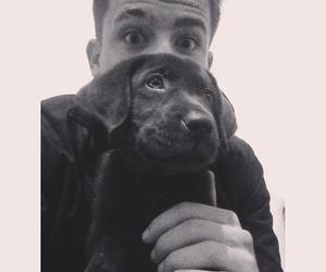 charlie puth and dog image
