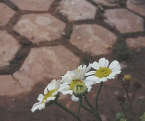 flor, flower, and tumblr image
