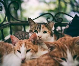 cat, animal, and dog image