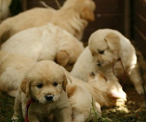 puppy, cute, and dogs image