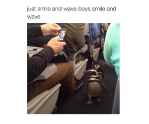 funny, penguins, and ahhaahah image
