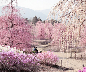 nature and pink image