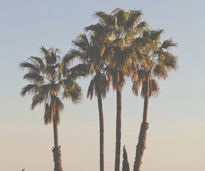 palm trees and city image