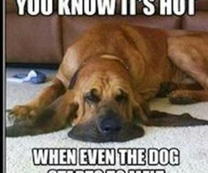 funny, dog, and Hot image