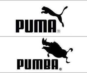 puma, pumba, and funny image