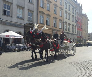 carriage and poland horses image