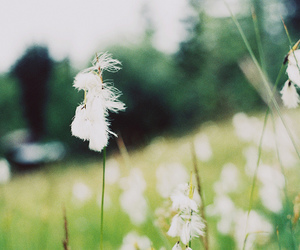 flower, grunge, and meadow image