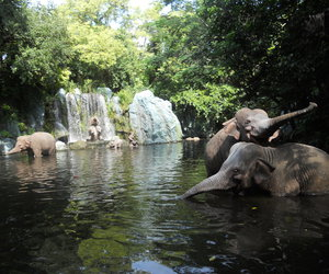 elephant and green image