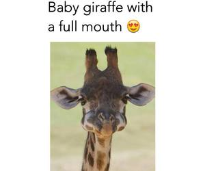 cute, giraffe, and animal image
