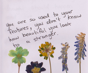 beautiful, quotes, and words image