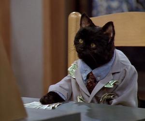 cat, black, and money image