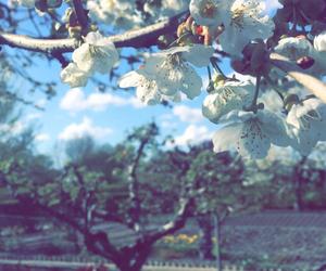 blue sky, cherry blossoms, and garden image