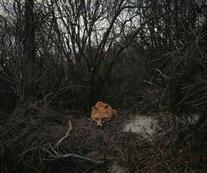 fox and tree image