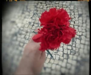 flower, red, and freedom image