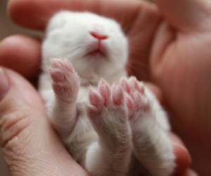 baby, born, and rabbit image