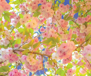 flowers, backgrounds, and pretty image