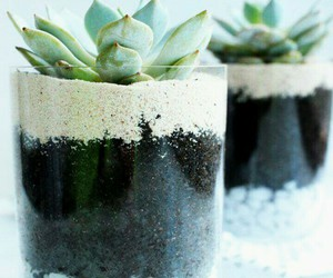 plants, diy, and succulents image