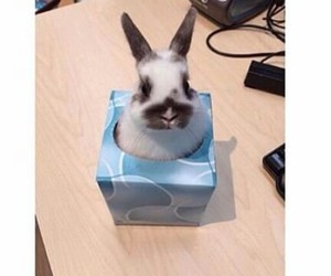 funny, bunny, and cute image