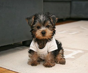 animal, happy, and puppy image