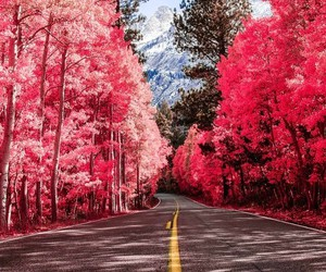 pink, road, and tree image