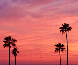 palm trees, sunset, and beach image