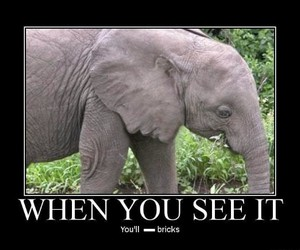 cool, face, and elephant image