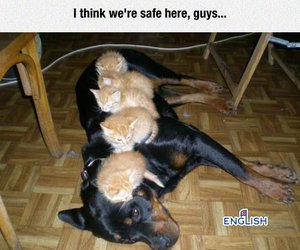 cats, dog, and kittens image