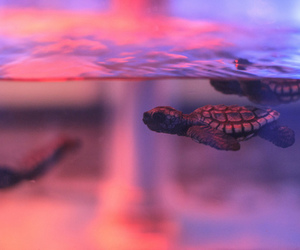 turtle, animal, and water image