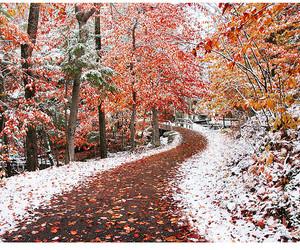 snow, tree, and autumn image