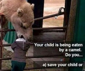 funny, camel, and child image