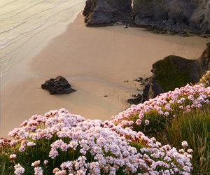 beach, flowers, and travel image
