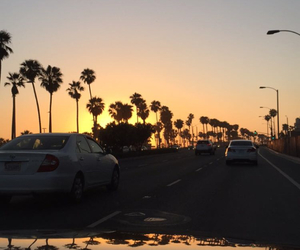 la, los angeles, and palm trees image