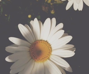flower, like, and nature image