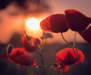 flowers, red, and sunset image
