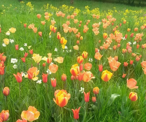 colorful, flowers, and grass image