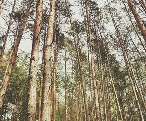 forest, freedom, and love image
