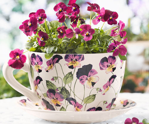 flowers, cup, and purple image