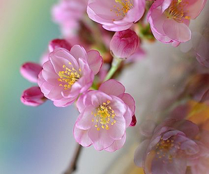 flowers, spring, and beautiful image