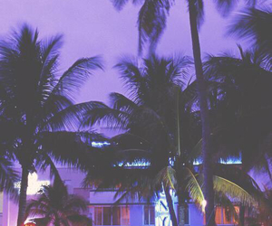 purple, hotel, and palm trees image