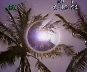 palm, sun, and vhs image