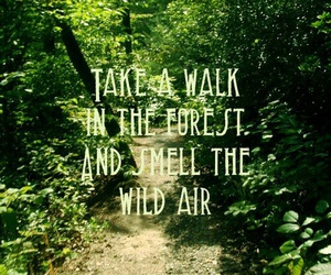 quote, forest, and nature image
