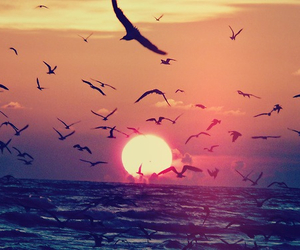 bird, sunset, and sea image