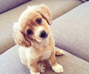 dog, little, and cute image
