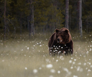 animal, bear, and beautiful image