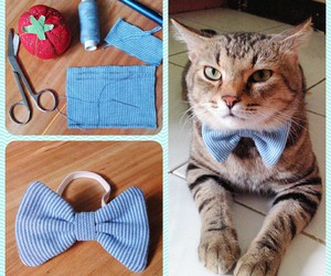 diy and cats image