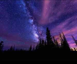 stars, forest, and tree image