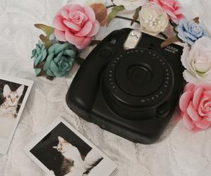 camera, cat, and polaroid image