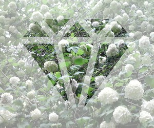 diamond, flowers, and green image