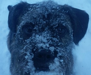 cold, dog, and snow image